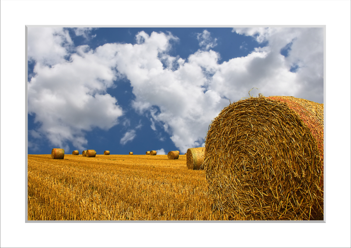 Mounted print of Straw Bales